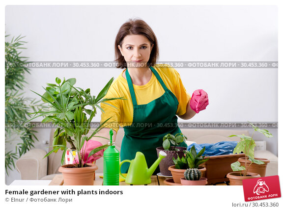 Female gardener with plants indoors. Стоковое фото, фотограф Elnur / Фотобанк Лори