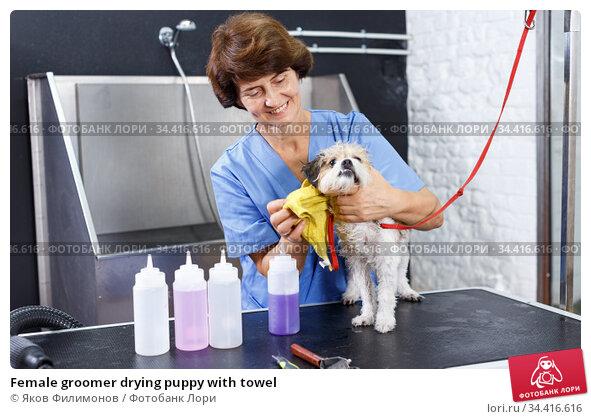 Female groomer drying puppy with towel. Стоковое фото, фотограф Яков Филимонов / Фотобанк Лори