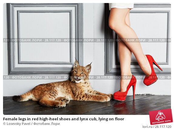Купить «Female legs in red high-heel shoes and lynx cub, lying on floor», фото № 28117120, снято 14 ноября 2015 г. (c) Losevsky Pavel / Фотобанк Лори