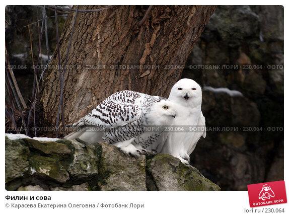Филин и сова, фото № 230064, снято 10 февраля 2008 г. (c) Карасева Екатерина Олеговна / Фотобанк Лори