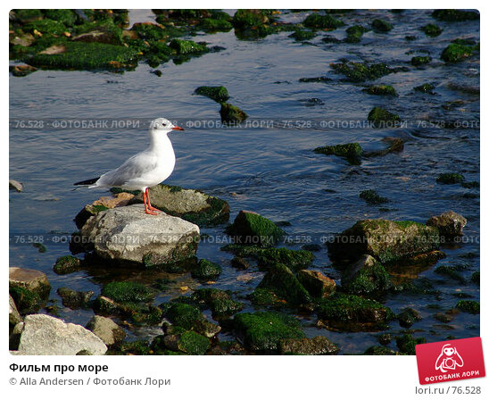 Фильм про море, фото № 76528, снято 19 октября 2006 г. (c) Alla Andersen / Фотобанк Лори
