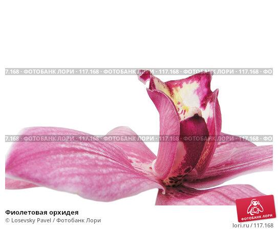 Фиолетовая орхидея, фото № 117168, снято 1 января 2005 г. (c) Losevsky Pavel / Фотобанк Лори