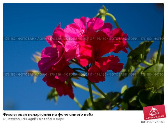 Купить «Фиолетовая пеларгония на фоне синего неба», фото № 176180, снято 23 июня 2007 г. (c) Петухов Геннадий / Фотобанк Лори