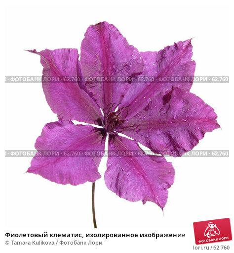 Фиолетовый клематис, изолированное изображение, фото № 62760, снято 17 июля 2007 г. (c) Tamara Kulikova / Фотобанк Лори