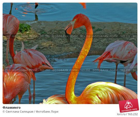 Купить «Фламинго», фото № 163232, снято 3 июня 2007 г. (c) Светлана Силецкая / Фотобанк Лори