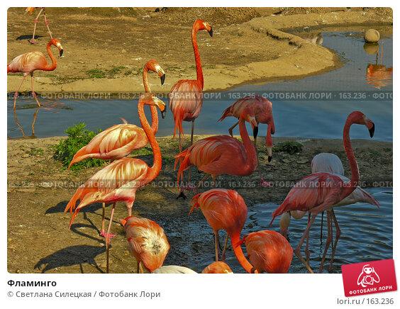 Фламинго, фото № 163236, снято 3 июня 2007 г. (c) Светлана Силецкая / Фотобанк Лори