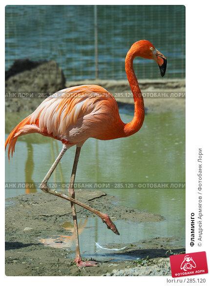 Купить «Фламинго», фото № 285120, снято 1 июня 2006 г. (c) Андрей Армягов / Фотобанк Лори