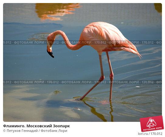 Фламинго. Московский Зоопарк, фото № 170012, снято 23 июня 2007 г. (c) Петухов Геннадий / Фотобанк Лори