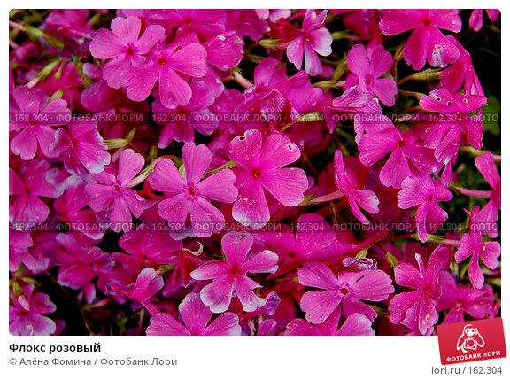 Флокс розовый, фото № 162304, снято 15 мая 2006 г. (c) Алёна Фомина / Фотобанк Лори