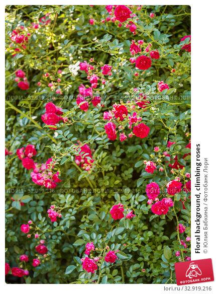 Купить «Floral background, climbing roses», фото № 32919216, снято 12 июля 2018 г. (c) Юлия Бабкина / Фотобанк Лори