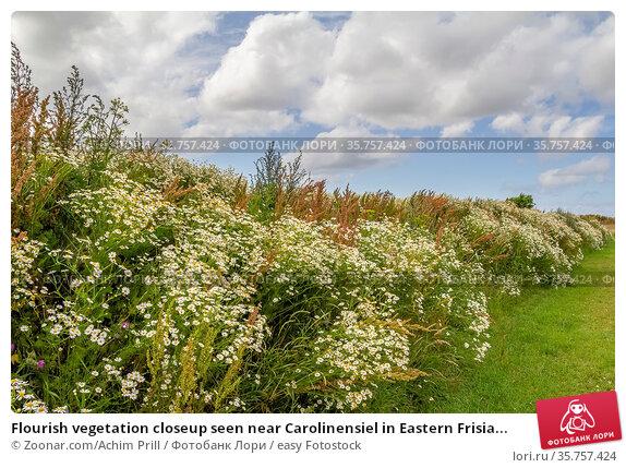 Flourish vegetation closeup seen near Carolinensiel in Eastern Frisia... Стоковое фото, фотограф Zoonar.com/Achim Prill / easy Fotostock / Фотобанк Лори