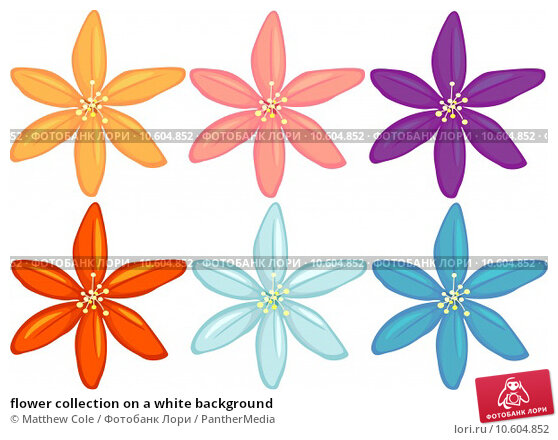 flower collection on a white background. Стоковая иллюстрация, иллюстратор Matthew Cole / PantherMedia / Фотобанк Лори
