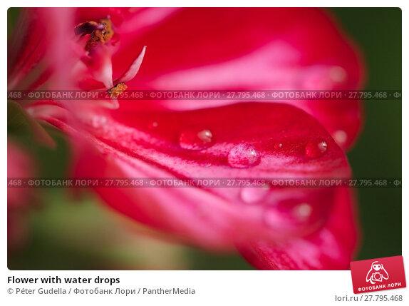 Купить «Flower with water drops», фото № 27795468, снято 16 октября 2018 г. (c) PantherMedia / Фотобанк Лори