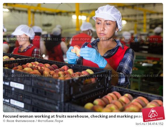Focused woman working at fruits warehouse, checking and marking peaches. Стоковое фото, фотограф Яков Филимонов / Фотобанк Лори