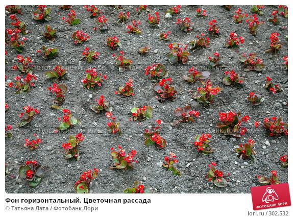 Фон горизонтальный. Цветочная рассада, эксклюзивное фото № 302532, снято 5 мая 2008 г. (c) Татьяна Лата / Фотобанк Лори