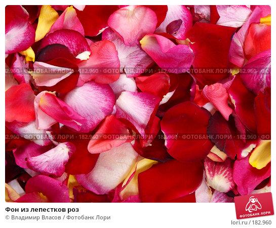 Фон из лепестков роз, фото № 182960, снято 19 января 2008 г. (c) Владимир Власов / Фотобанк Лори