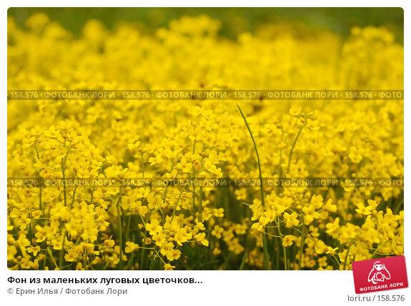 Фон из маленьких луговых цветочков..., фото № 158576, снято 9 мая 2007 г. (c) Ерин Илья / Фотобанк Лори
