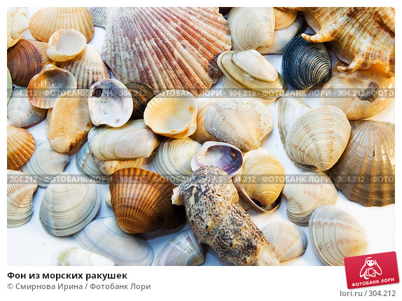 Фон из морских ракушек, фото № 304212, снято 29 мая 2008 г. (c) Смирнова Ирина / Фотобанк Лори