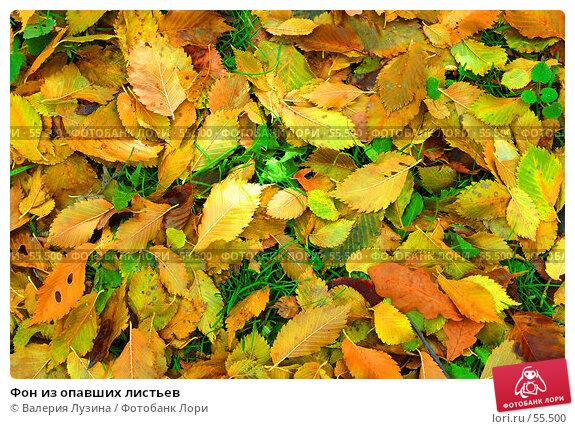 Фон из опавших листьев, фото № 55500, снято 3 октября 2006 г. (c) Валерия Потапова / Фотобанк Лори