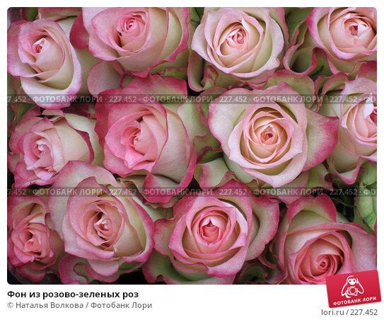 Фон из розово-зеленых роз, эксклюзивное фото № 227452, снято 24 октября 2007 г. (c) Наталья Волкова / Фотобанк Лори