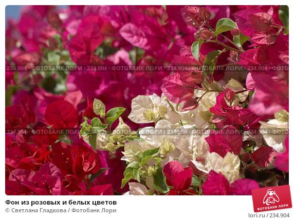 Фон из розовых и белых цветов, фото № 234904, снято 30 мая 2017 г. (c) Cветлана Гладкова / Фотобанк Лори