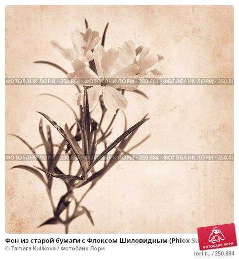 Фон из старой бумаги с Флоксом Шиловидным (Phlox Subulata), иллюстрация № 250884 (c) Tamara Kulikova / Фотобанк Лори