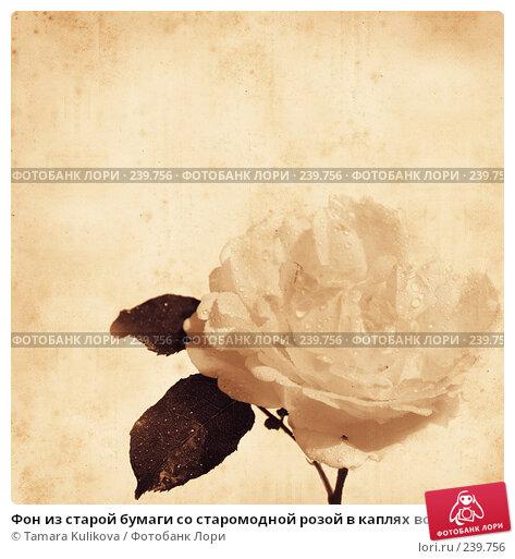 Фон из старой бумаги со старомодной розой в каплях воды, иллюстрация № 239756 (c) Tamara Kulikova / Фотобанк Лори
