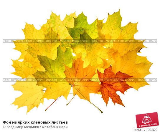 Фон из ярких кленовых листьев, фото № 100320, снято 28 сентября 2007 г. (c) Владимир Мельник / Фотобанк Лори