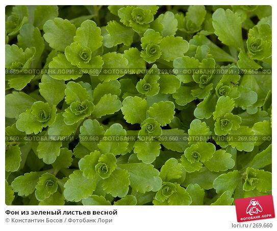 Купить «Фон из зеленый листьев весной», фото № 269660, снято 22 ноября 2017 г. (c) Константин Босов / Фотобанк Лори
