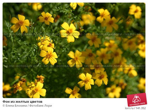 Фон из желтых цветов, фото № 141352, снято 26 августа 2007 г. (c) Елена Блохина / Фотобанк Лори