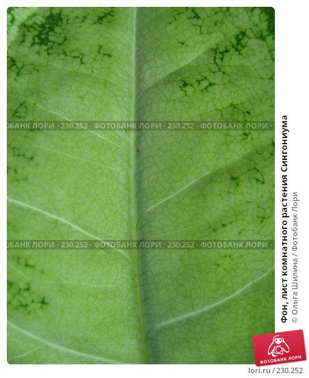 Фон, лист комнатного растения Сингониума, фото № 230252, снято 20 марта 2008 г. (c) Ольга Шилина / Фотобанк Лори
