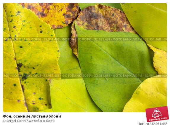 Фон, осенние листья яблони. Стоковое фото, фотограф Sergei Gorin / Фотобанк Лори