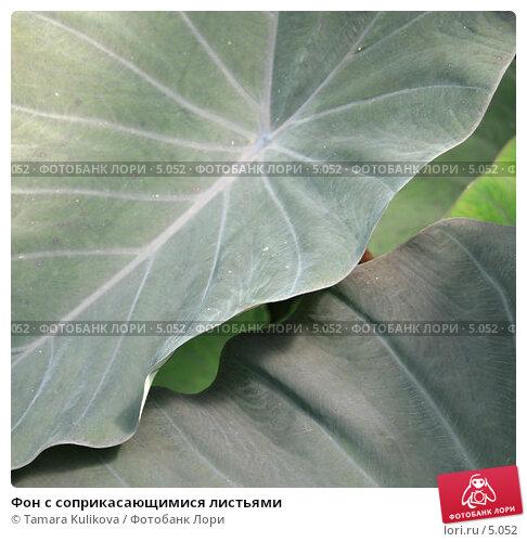 Фон с соприкасающимися листьями, фото № 5052, снято 1 июля 2006 г. (c) Tamara Kulikova / Фотобанк Лори