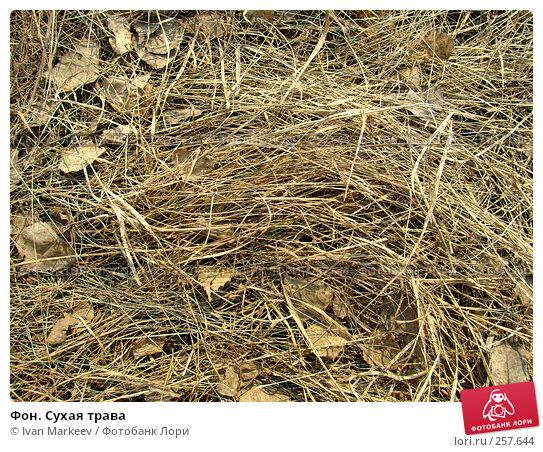 Купить «Фон. Сухая трава», фото № 257644, снято 21 апреля 2018 г. (c) Ivan Markeev / Фотобанк Лори