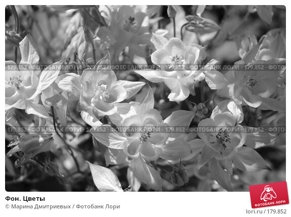 Фон. Цветы, фото № 179852, снято 16 июня 2007 г. (c) Марина Дмитриевых / Фотобанк Лори