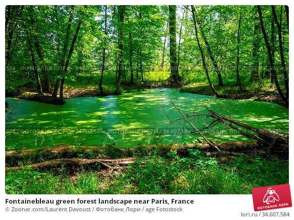 Fontainebleau green forest landscape near Paris, France. Стоковое фото, фотограф Zoonar.com/Laurent Davoust / age Fotostock / Фотобанк Лори