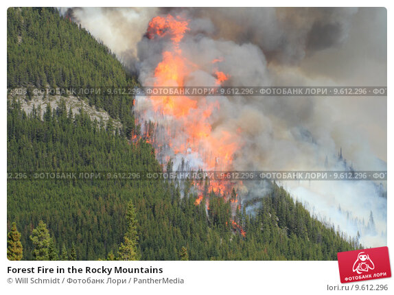 Купить «Forest Fire in the Rocky Mountains », фото № 9612296, снято 13 августа 2019 г. (c) PantherMedia / Фотобанк Лори