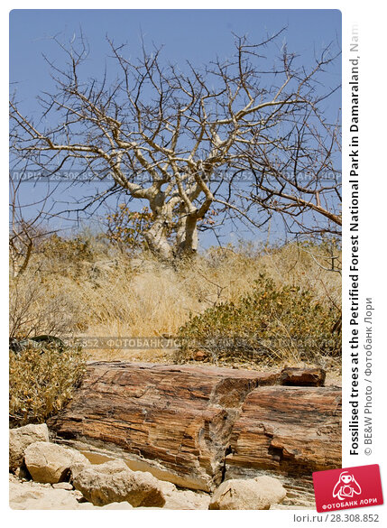 Купить «Fossilised trees at the Petrified Forest National Park in Damaraland, Namibia», фото № 28308852, снято 21 апреля 2018 г. (c) BE&W Photo / Фотобанк Лори