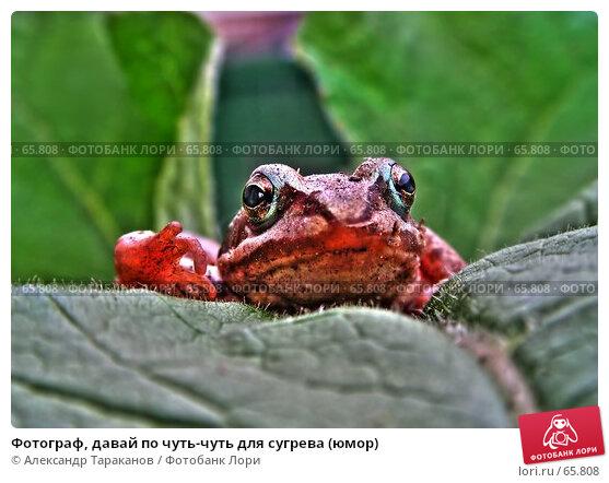 Фотограф, давай по чуть-чуть для сугрева (юмор), эксклюзивное фото № 65808, снято 23 марта 2017 г. (c) Александр Тараканов / Фотобанк Лори