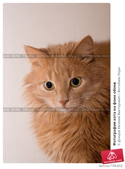 Фотография кота на фоне обоев, фото № 176612, снято 10 января 2008 г. (c) Донцов Евгений Викторович / Фотобанк Лори