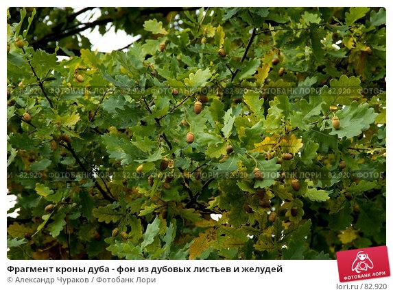 Фрагмент кроны дуба - фон из дубовых листьев и желудей, фото № 82920, снято 12 сентября 2007 г. (c) Александр Чураков / Фотобанк Лори