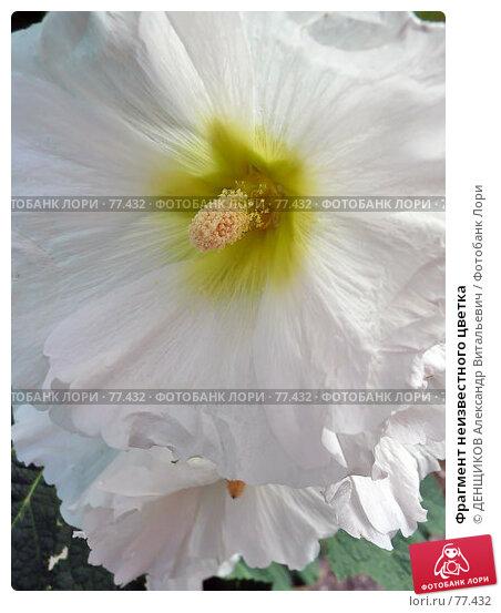 Фрагмент неизвестного цветка, фото № 77432, снято 30 июня 2007 г. (c) ДЕНЩИКОВ Александр Витальевич / Фотобанк Лори