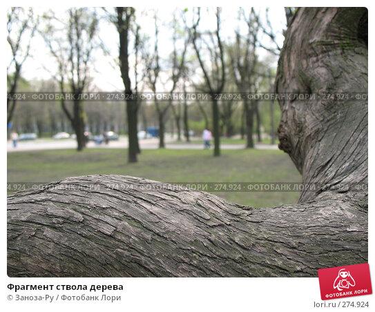 Фрагмент ствола дерева, фото № 274924, снято 1 мая 2008 г. (c) Заноза-Ру / Фотобанк Лори