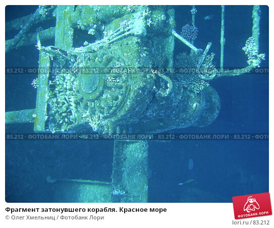 Фрагмент затонувшего корабля. Красное море, фото № 83212, снято 9 марта 2005 г. (c) Олег Хмельниц / Фотобанк Лори