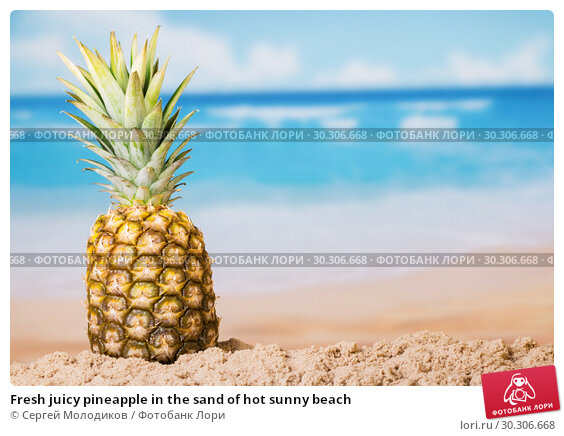 Купить «Fresh juicy pineapple in the sand of hot sunny beach», фото № 30306668, снято 22 декабря 2017 г. (c) Сергей Молодиков / Фотобанк Лори