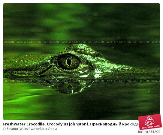 Freshwater Crocodile. Crocodylus johnstoni. Пресноводный крокодил в тропической реке. Глаз крупным планом, фото № 34920, снято 15 апреля 2007 г. (c) Eleanor Wilks / Фотобанк Лори