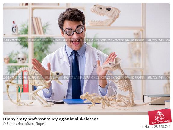 Купить «Funny crazy professor studying animal skeletons», фото № 28728744, снято 7 марта 2018 г. (c) Elnur / Фотобанк Лори