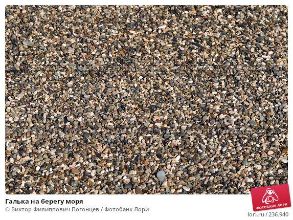 Галька на берегу моря, фото № 236940, снято 30 августа 2006 г. (c) Виктор Филиппович Погонцев / Фотобанк Лори