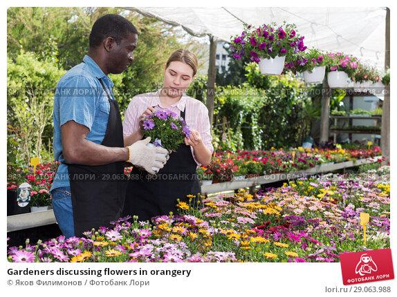 Купить «Gardeners discussing flowers in orangery», фото № 29063988, снято 19 апреля 2018 г. (c) Яков Филимонов / Фотобанк Лори