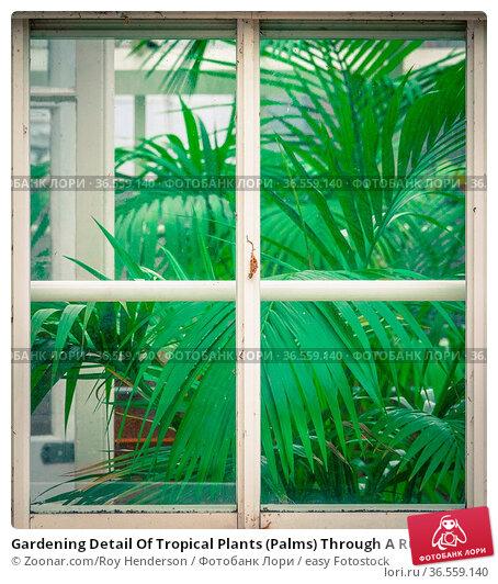 Gardening Detail Of Tropical Plants (Palms) Through A Rustic Greenhouse... Стоковое фото, фотограф Zoonar.com/Roy Henderson / easy Fotostock / Фотобанк Лори
